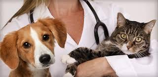 Ветеринария — WomanWiki - женская энциклопедия